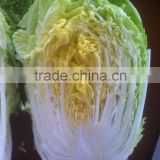 2014 hot sell Fresh organic Chinese cabbage from JINING BROTHER