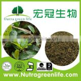 factory outlet health care skin whitening Chinese herb original Herbal Medicine Camellia sinensis