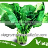 High Yield Kailan Kale Broccoli Seeds VGK 01/ Vegetable seeds