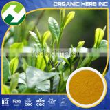 Tea Series Sweet Tea Leaf Extract or Halal Green Tea Powder