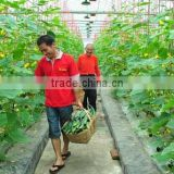 Good daylighting and UV resistance vegetables greenhouse,fruit greenhouse,fiberglass greenhouse