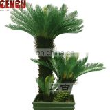 outdoor plants and trees cycas plant