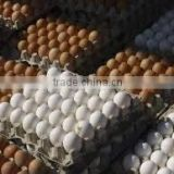 Fresh Brown & White Table Eggs Chicken Eggs. Best Quality