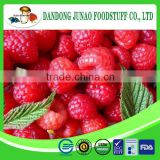 frozen fresh fruit manufacturer raspberry harvester