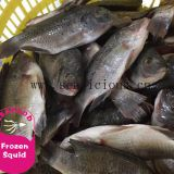 Xiamen Tilapia Fish Whole Round, Black Tilapia Farm Raised