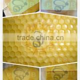 Purebees apis mellifera beeswax plastic foundation sheet