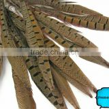 Wholesale Reeves pheasant tail feathers, Natural Pheasant Tail Feathers