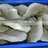 frozen japanese sea bass fish fillet for sale