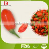 bulk sale top quanlity conventional goji / goji berry price /chinese medlar/dried goji berries