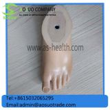 Sach Foot Orthopedic Implant Prosthetic Sach Foot