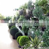 China manufacture natural looking artificial grass ball bonsai topiary tree bonsai for indoor and outdoor decor