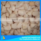 IQF frozen bay scallop