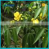 Best selling products senna tea benefits