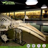 Science Education Life Size Whale Skeleton
