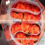 wholesale Fresh cut flower buyer fresh anthurium rose yunnan all types of flowers rose in best quality