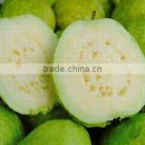 Fresh Guava - fresh rambutan- fresh mango High Quality and Best Price