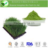 GMP Manufacturer Supply Herbal Medicine For Lose Weight Organic Barley Green Powder Bulk