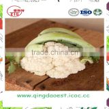 Organic green vegetables fresh cauliflower from china