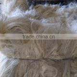 Specail Promotion offer NATURAL SISAL FIBER WITH ORIGIN OF KENYA