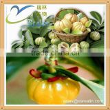 Garcinia cambogia extract capsules kosher halal for weight loss
