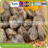 High quality frozen boiled short necked clam with shell for sale
