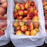Buy high-quality goods nectarine