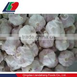 High Quality Wholesale Price Fresh Natural White Garlic