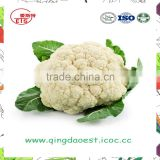 Harvest for sale in Competitive Price Chinese Fresh Cauliflowers