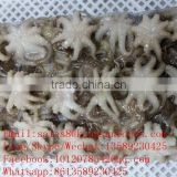 fresh frozen Baby Octopus Octopus Ocellated whole round for sale