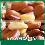 Wholesale Shelled Coated High Quality Cedar Open Pine Nuts in Shell