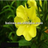 OEM/ODM CAS NO. 90028-66-3 Pure Natural Cold Pressed Evening Primrose Oil benefits For Capsule, Cosmetic, Hair, Medicine