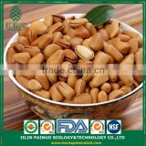 Continous Supply Snack Foods CIF Siberian Cedar Open Pine Nuts in Shell
