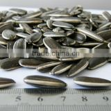 Chinese bulk Sunflower seed organic polly seed