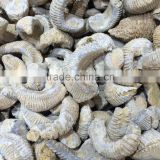Natural Ammonite Fossils Raw Crystal Stones For Sale