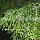 100% Pure Natural Fir Needle Essential Oil(Abies alba)