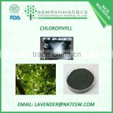 Factory Supply 100% Pure Natural Chlorophyll Extract
