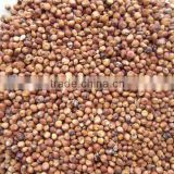 2013 new crop red sorghum (red broomcorn/kafir corn/kaoliang)