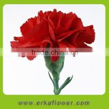Fresh Cut spray carnation High Quality Flower