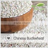 New Product Korean Type Buckwheat Noodles