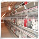 Poultry farming automation h type broiler layer cage for sale