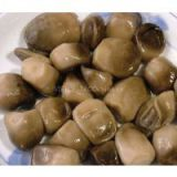 CANNED STRAW MUSHROOM ( Angela - HP: +84 1655 827 745)