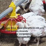 Libya Poultry Farming Equipment Automatic Broiler Floor Raising System & Chicken Deep Litter System with Automatic Drinking& Feeding System