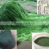 Spirulina dried powder