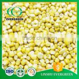 Pure hot sale sell freeze dried sweet corn                                                                                                         Supplier's Choice