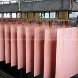 Inquiry about Copper Cathodes,