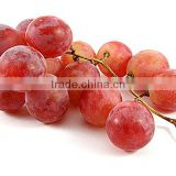 Best price seedless grapes