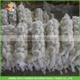 Top quality 5.0cm fresh pure white garlic with best price