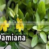 High Quality Plant Extract Damiana Leaf P.E. 4:1