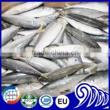 Whole Round Scad Fish Frozen Flying Fish