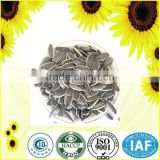 raw processing type chinese sun flower seeds 5009